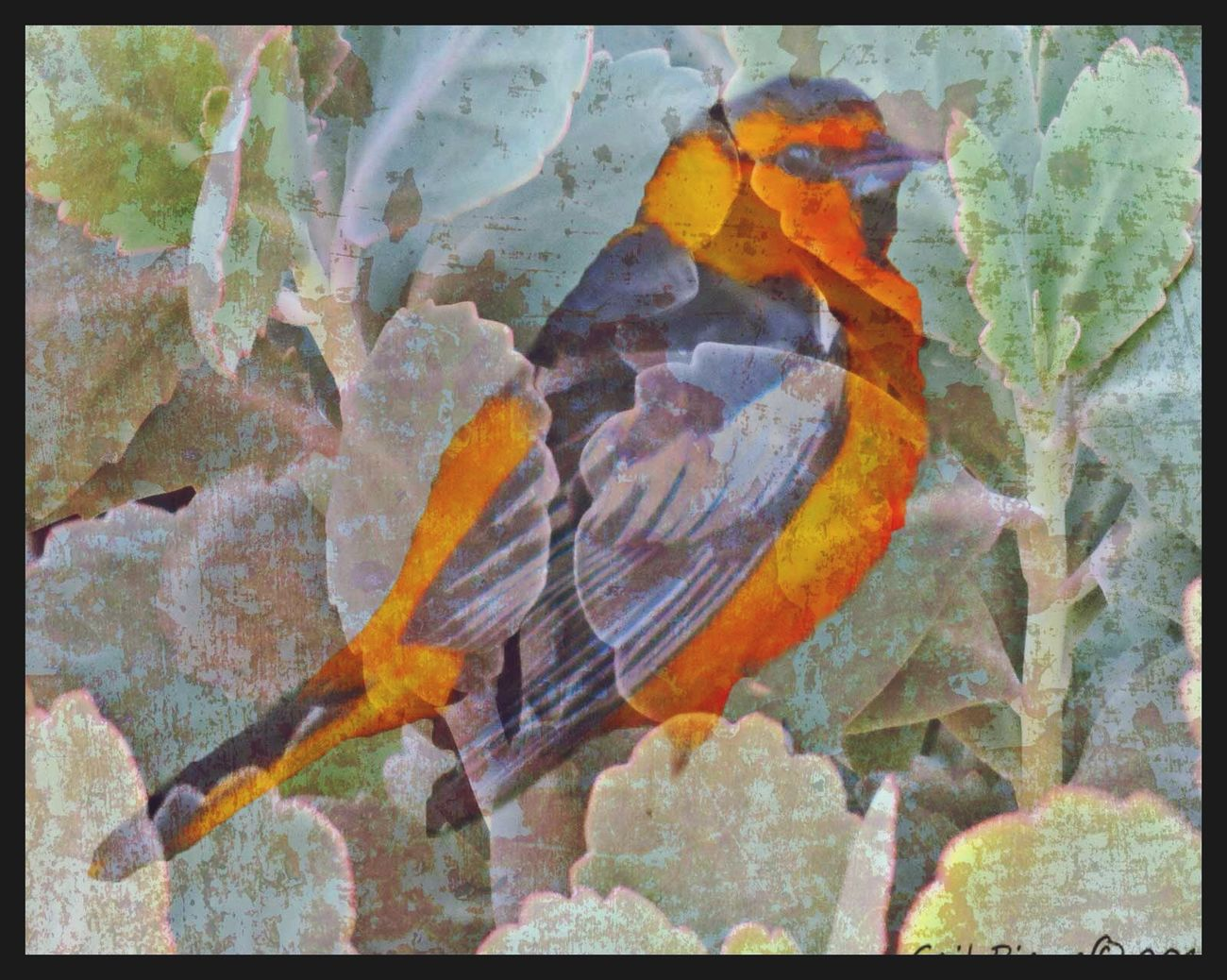 In the Garden. Oriole, Digital Expression, Distressed Garden, Birds,