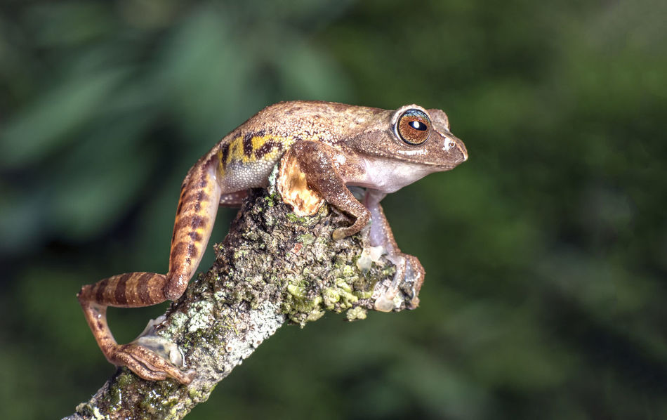 Beautiful stock photos of frosch,  Animal Themes,  Animal Wildlife,  Animals In The Wild,  Brown
