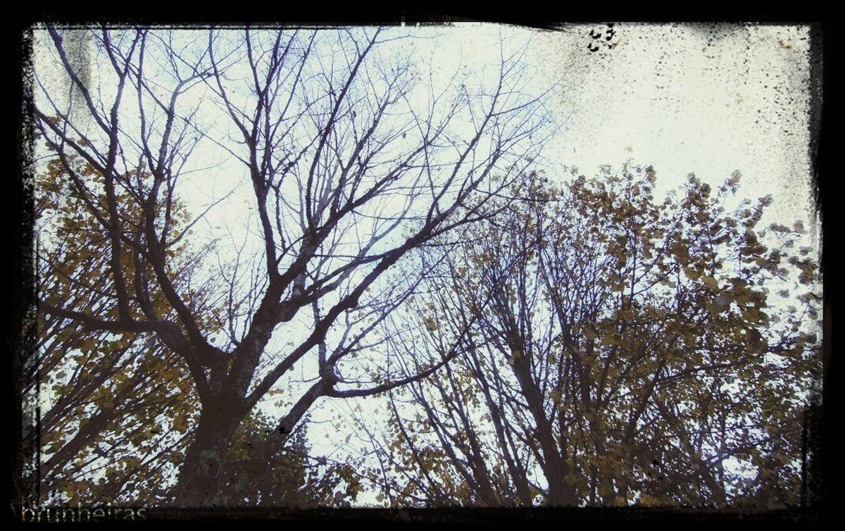 Where Leaves Gone?