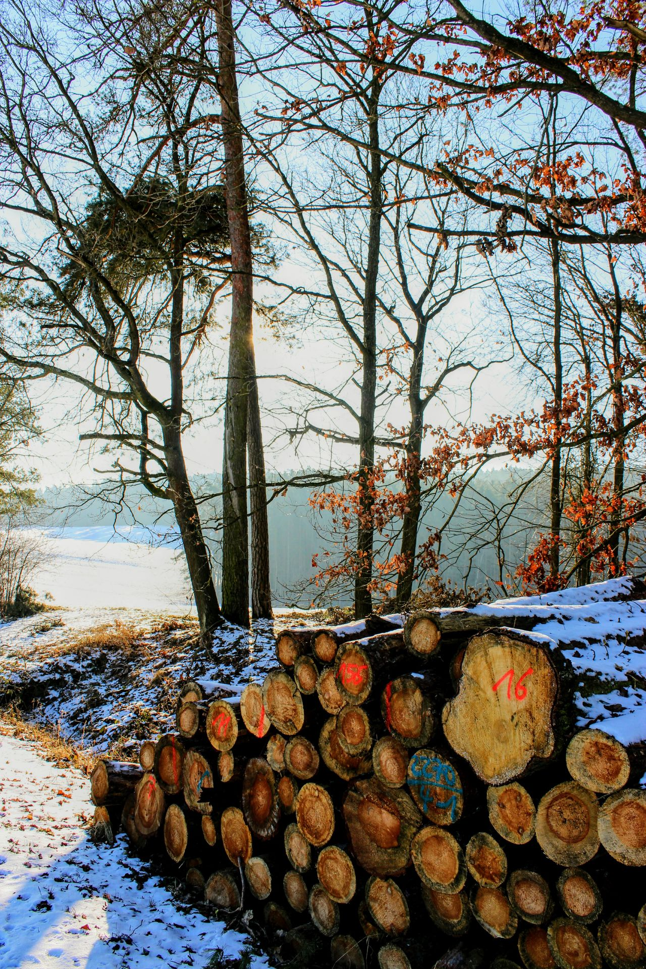 Tree trunks. Marked with numbers and colors. Lying at the edge of the woods Tree Stack Outdoors Large Group Of Objects No People Day Nature Freshness Sky Close-up Wood Industry Forestry Commerce Winter Cold Snow Sunlight Sunshine Backlight Path Wood Forest