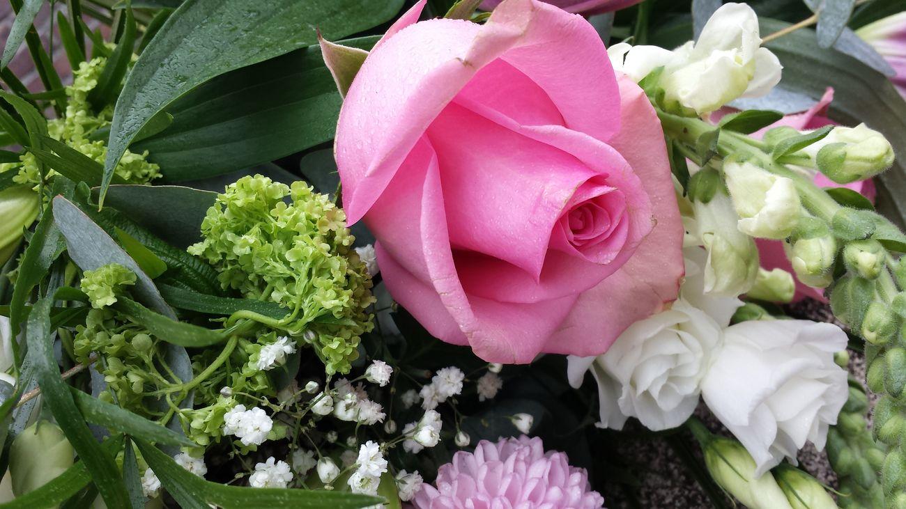 Kamp Vught Netherland Flower Love The Colors Hate War