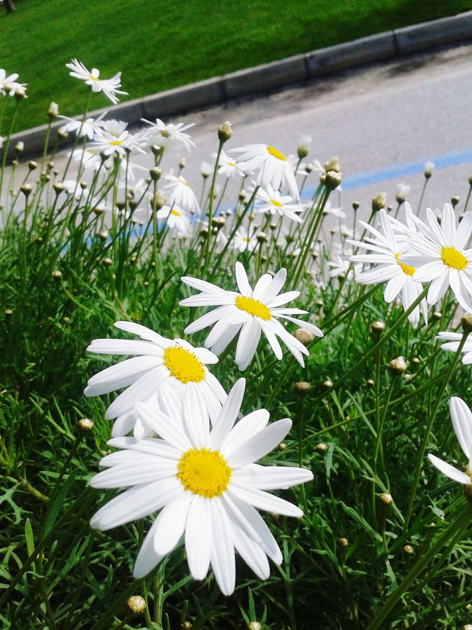 EyeEm Gallery Nature_collection EyeEm Nature Lover Nature_collection Flowers,Plants & Garden