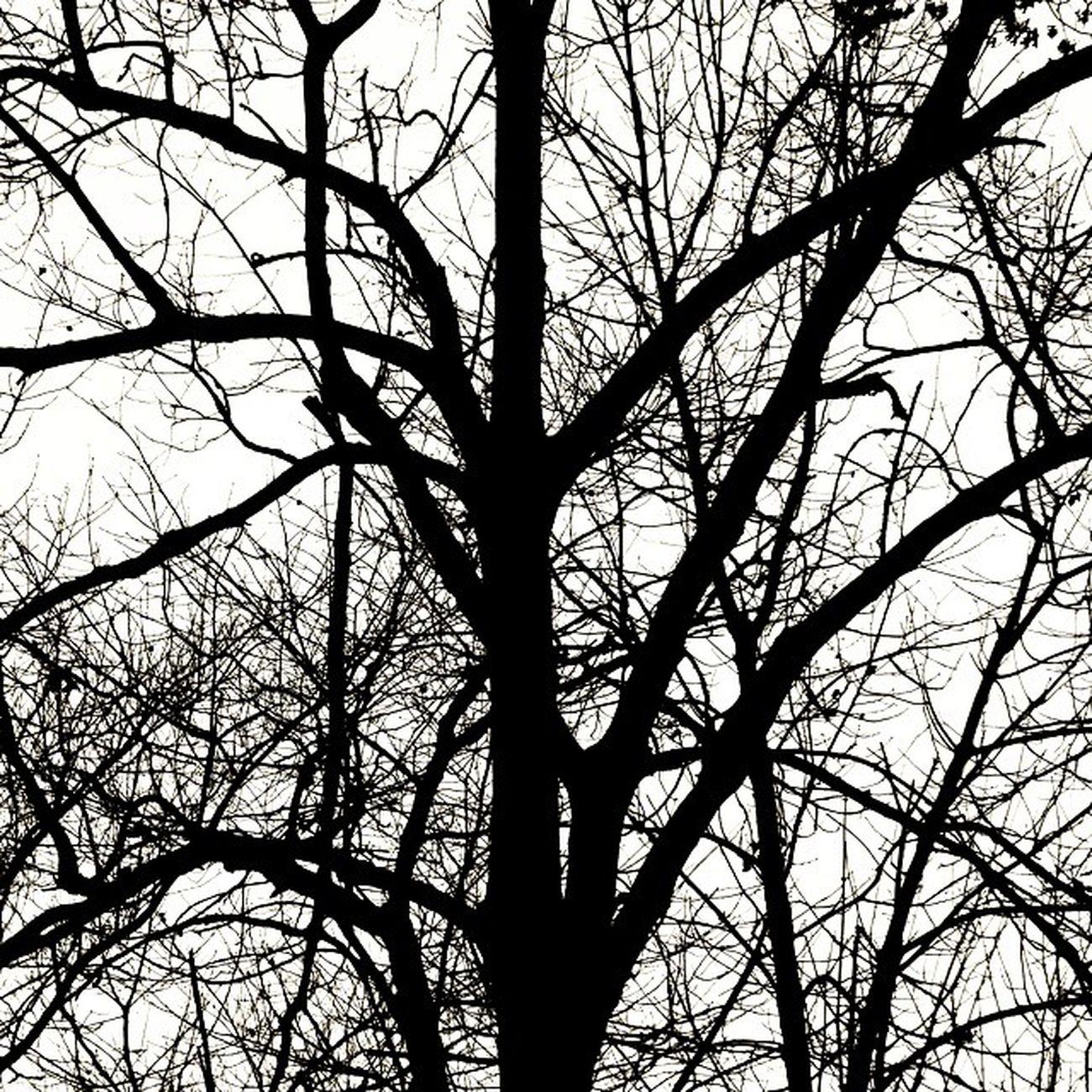 365 Tree Blackandwhite