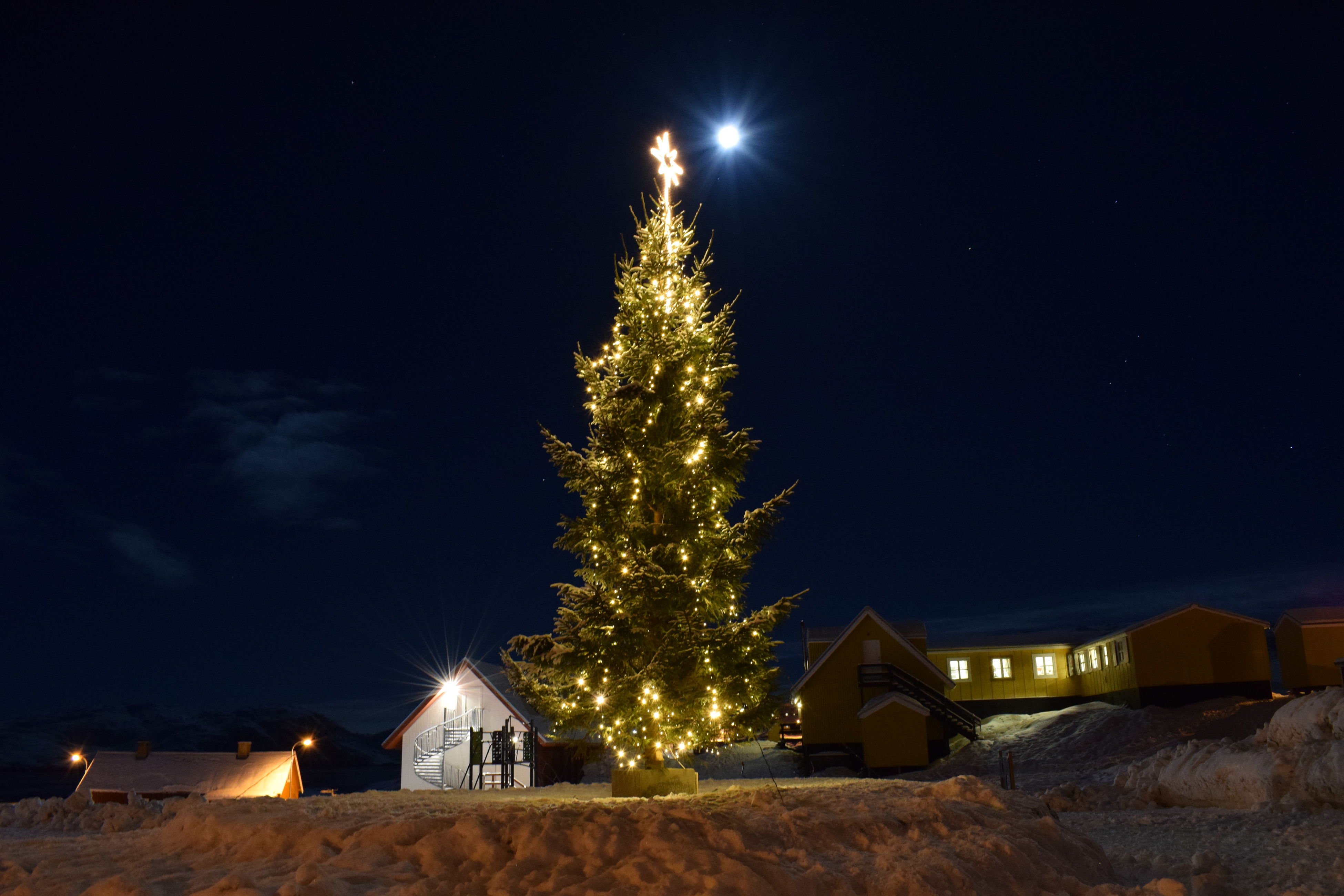night, christmas tree, illuminated, christmas, tree, celebration, christmas decoration, christmas lights, no people, sky, building exterior, architecture, built structure, outdoors, nature