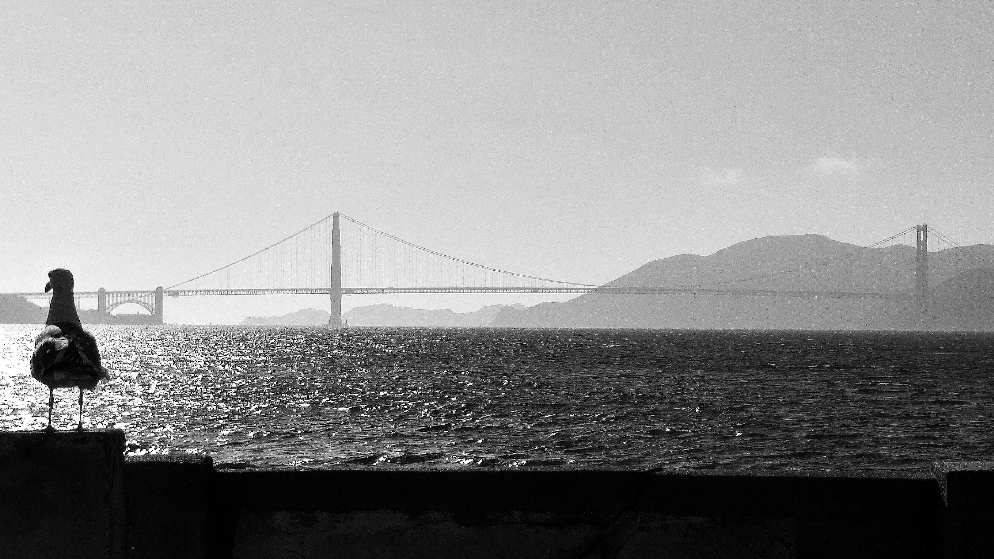 water, sea, clear sky, copy space, connection, built structure, architecture, sky, silhouette, nature, scenics, railing, bridge - man made structure, tranquility, tranquil scene, horizon over water, beauty in nature, outdoors, bird, street light