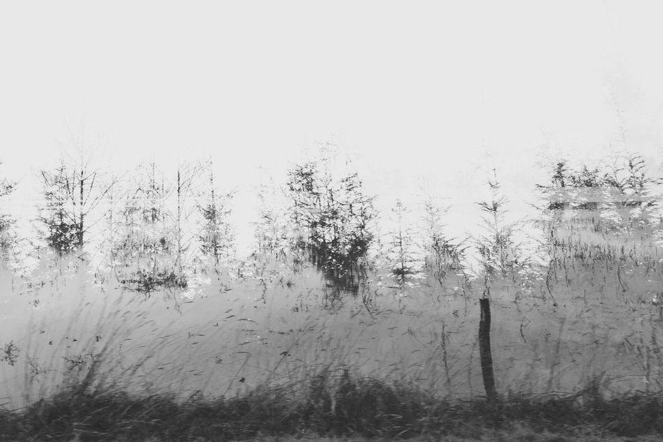 Landscape_Collection Black & White