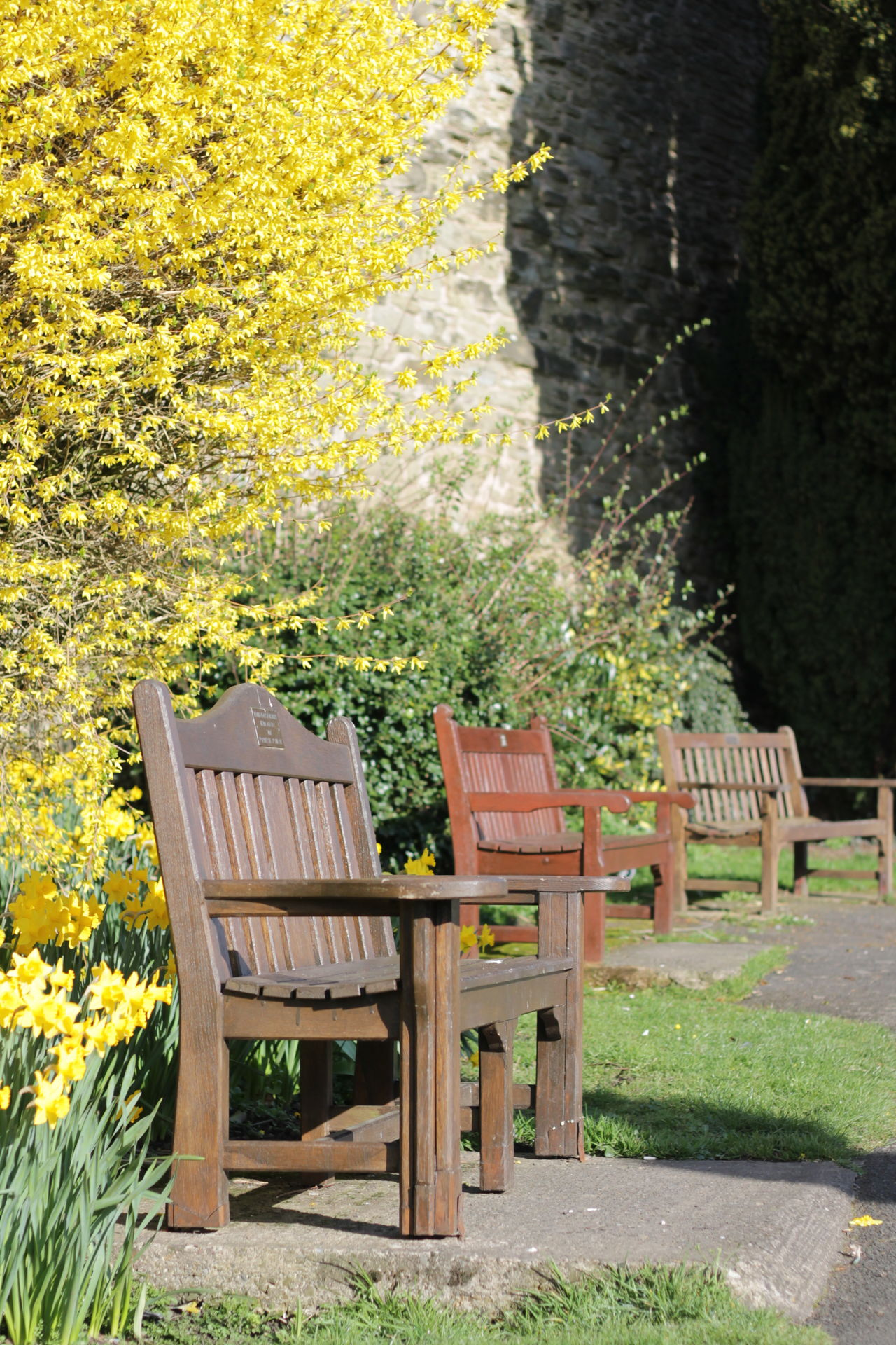 Autumn Beauty In Nature Chair Day Flower Green Color Growth Leaf Nature No People Outdoors Plant Tranquility Tree Yellow
