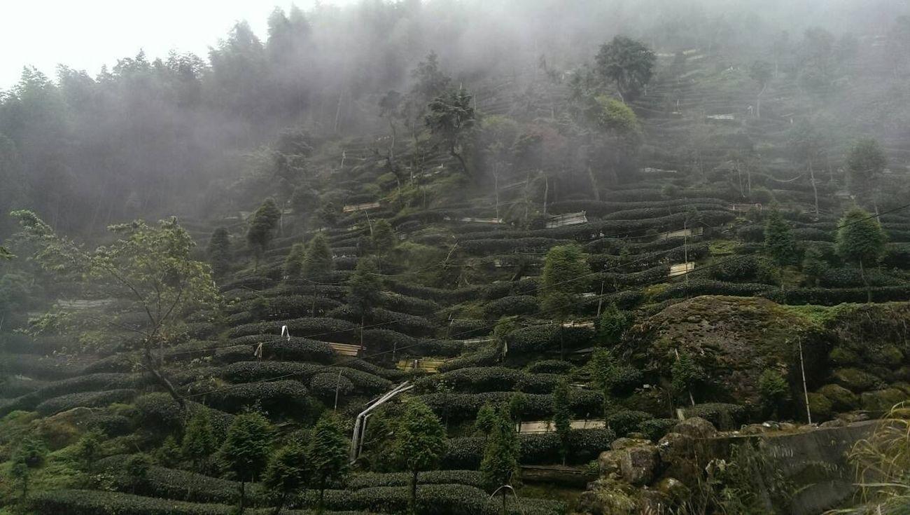 Enjoying Life Tea Farm So Beautiful