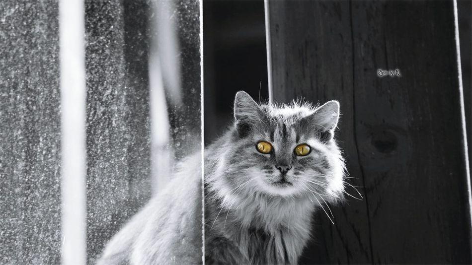 You surprised me Domestic Cat Pets Looking At Camera Eyeem Best Shot EyeEm Best Shots Photography Taking Photos Mammal