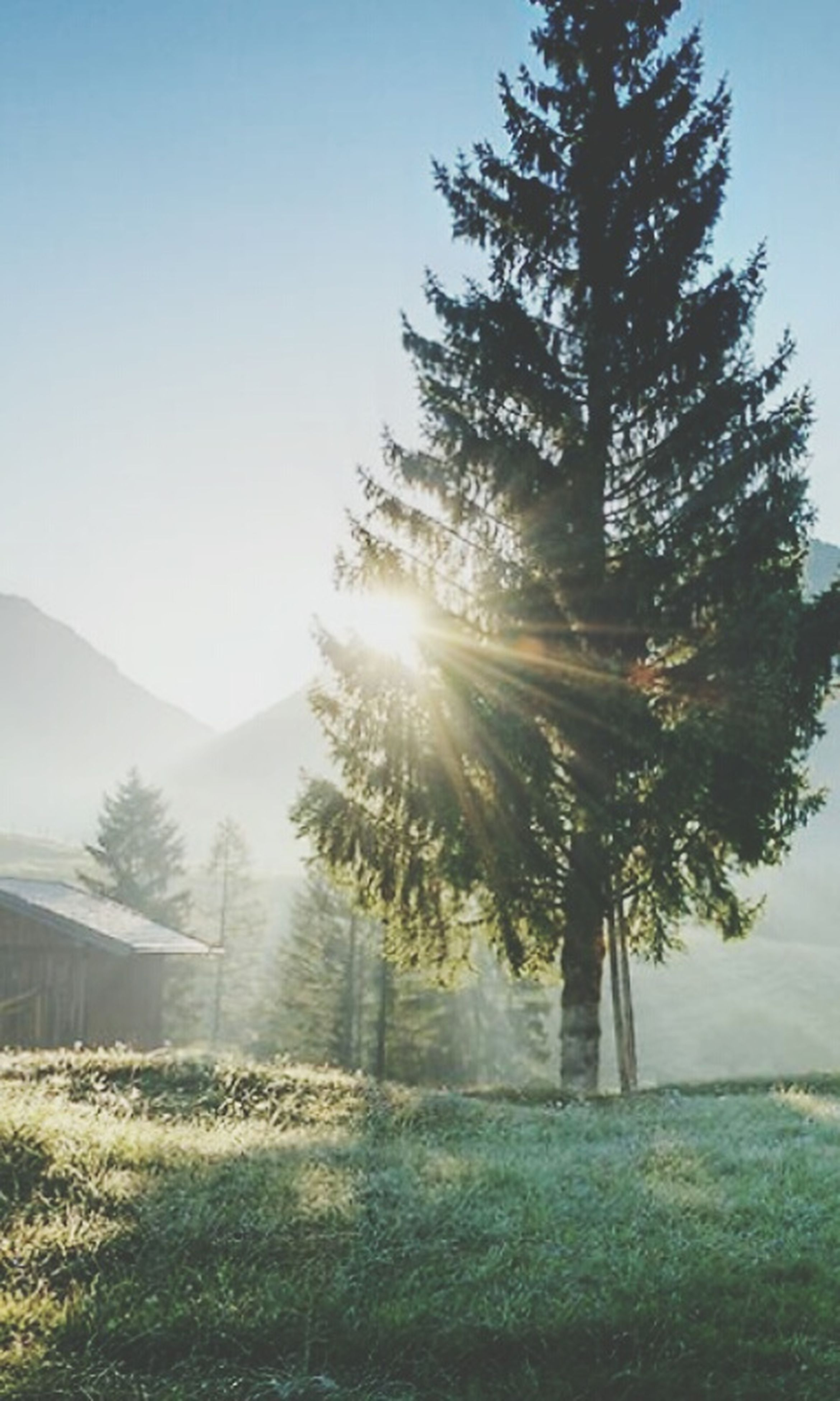 sun, clear sky, sunbeam, sunlight, tranquil scene, tranquility, lens flare, tree, beauty in nature, scenics, landscape, nature, mountain, field, copy space, growth, sky, sunny, bright, non-urban scene
