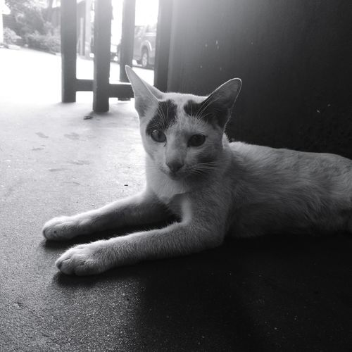 Catslover Catslave Catsagram