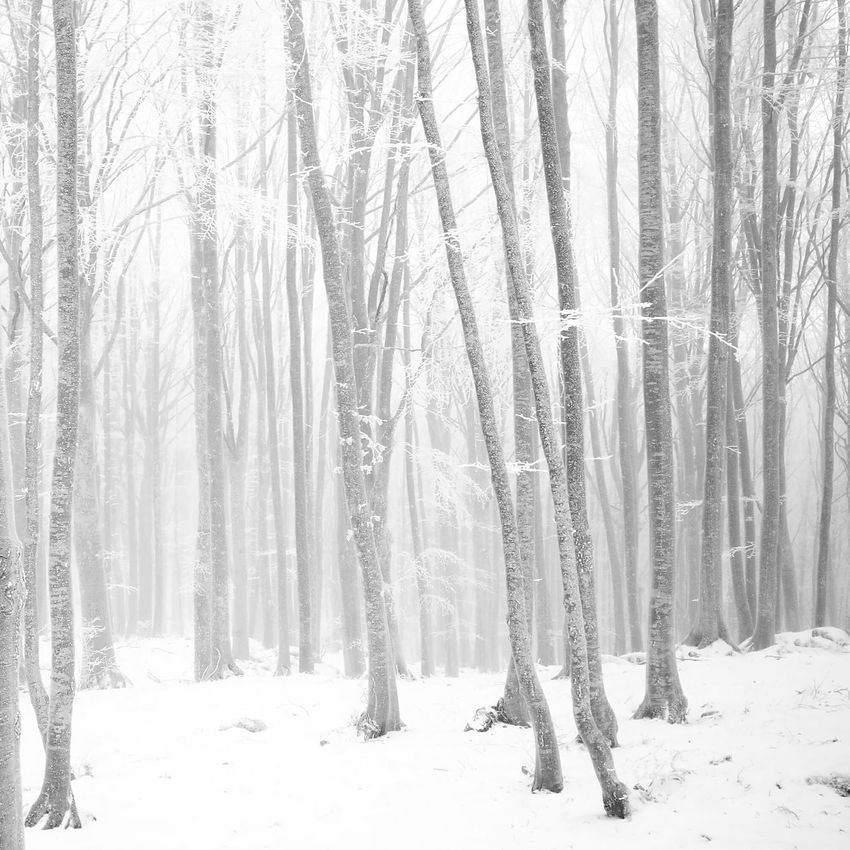 Taking Photos Relaxing Snow Day Enjoying Life Winter Tuscany Italy Italia Snow ❄ Snow Snowing MonteAmiata Cold Trees Abbadia San Salvatore Neve Heartbeat Moment Silence Bosco Walking In The Snow Shot