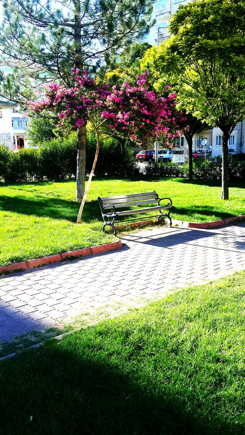Grass Nature Outdoors Growth Sunlight Tree Day Park - Man Made Space No People Shadow Beauty In Nature Water Malatya Bostanbası