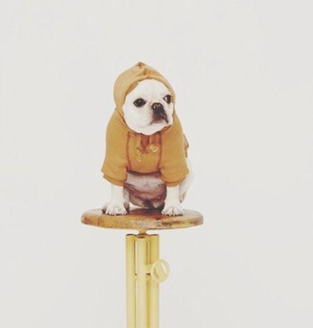 My Puppy ❤ Family❤ Frenchbulldog I Love My Dog