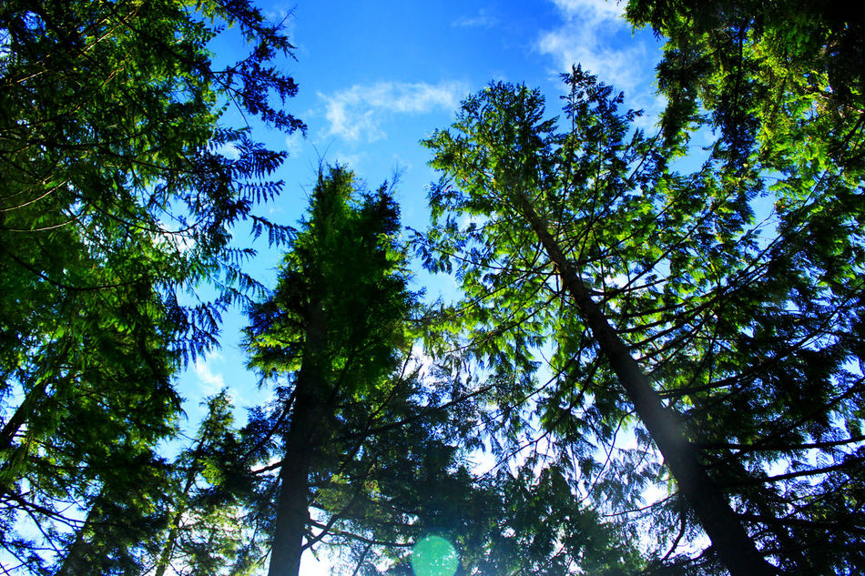 Upright trees Backlit Bare Tree Bird Blue Branch Clear Sky Day Growing Growth Light Low Angle View Nature No Limits No People Outdoors Relaxing Moments Sky Tall Tree,Tall Trees Tranquility Tree Tree Trunk Tropical Climate Upright Tree