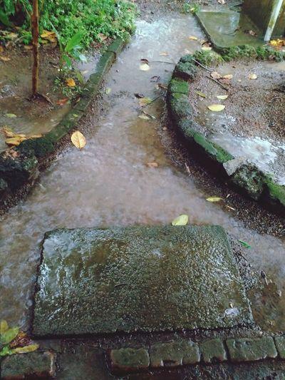 Randomshot Backyard Rainy Days WaTerFLoWiNgOuT Kerala India Naturepatterns Waterdesign