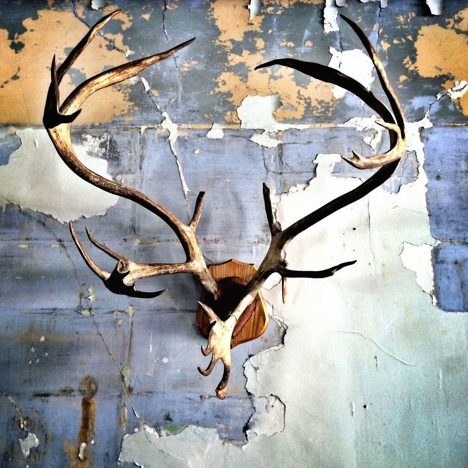 Beautiful stock photos of death, Animal Head, Animal Skull, Antler, Cruel