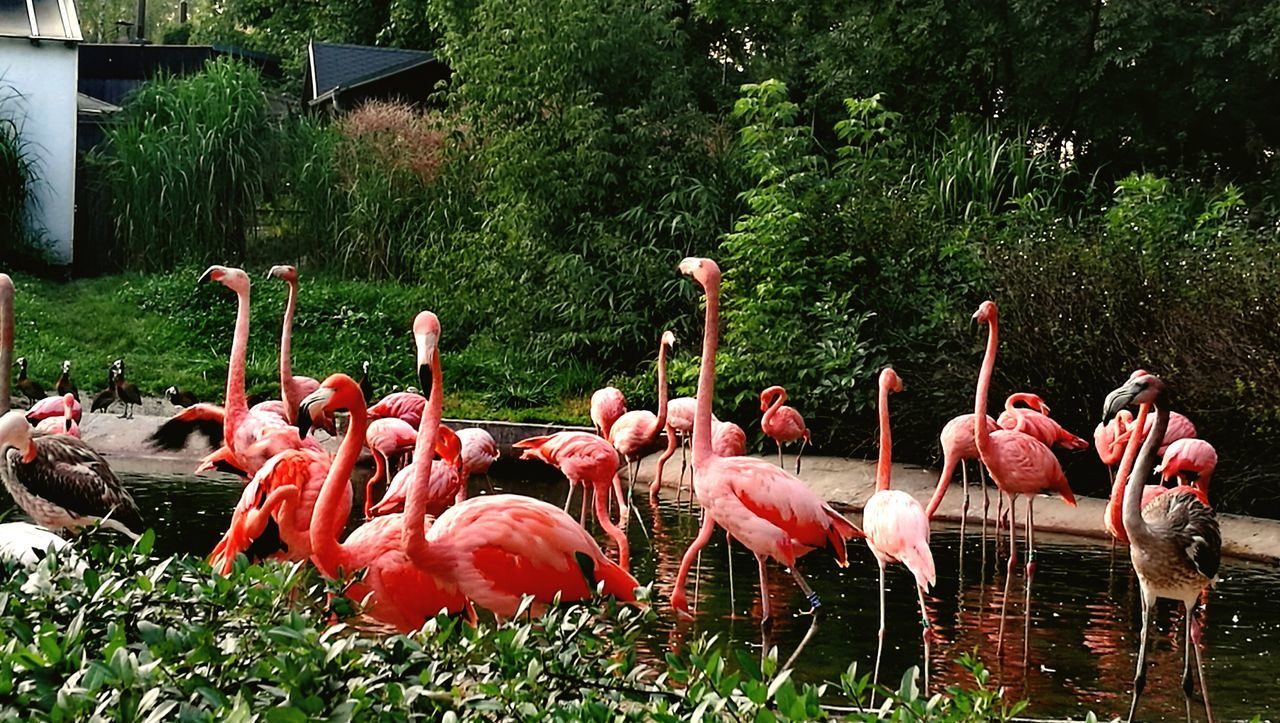 Animal_collection Animal Themes Animals Animal Photography Animal Love No People Natural Beauty Outdoors Zwierzęta Animal Portrait Flamingo Flamingos Flamingos In Water