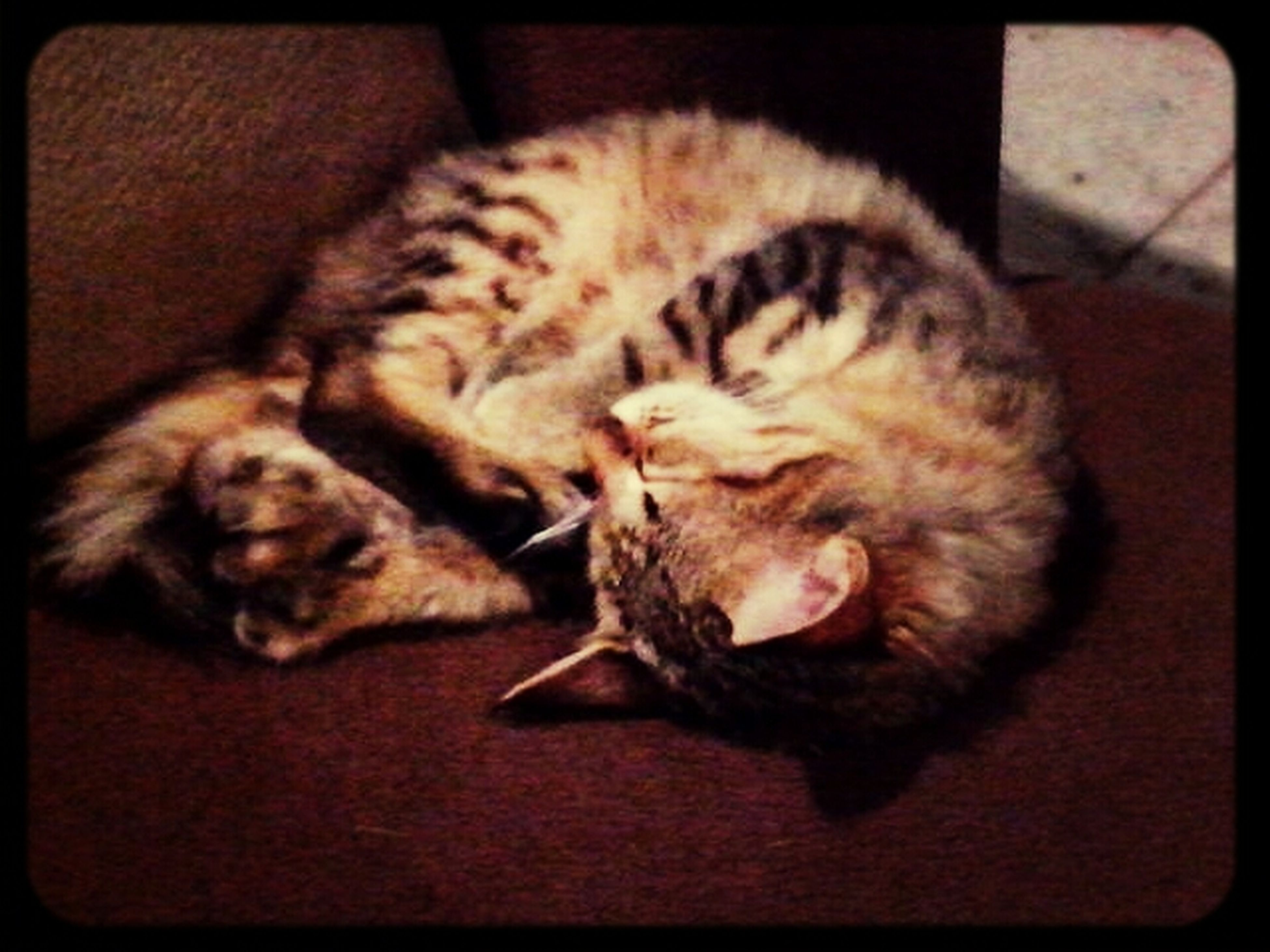 animal themes, pets, one animal, mammal, domestic animals, domestic cat, sleeping, relaxation, cat, indoors, resting, feline, transfer print, lying down, eyes closed, auto post production filter, whisker, close-up, comfortable, zoology