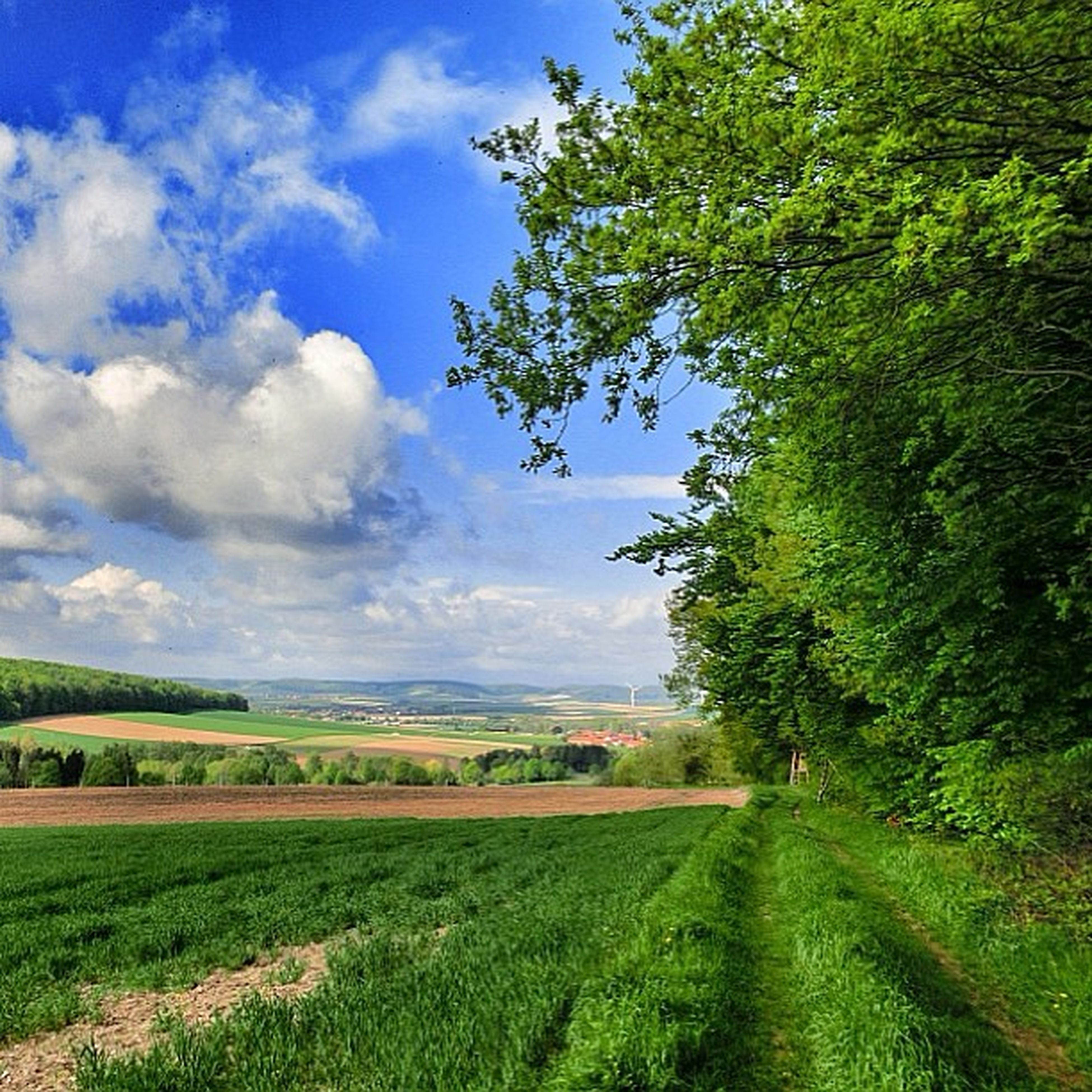 field, landscape, tranquil scene, sky, tranquility, tree, rural scene, agriculture, growth, grass, scenics, beauty in nature, nature, green color, farm, crop, cloud, cloud - sky, cultivated land, grassy
