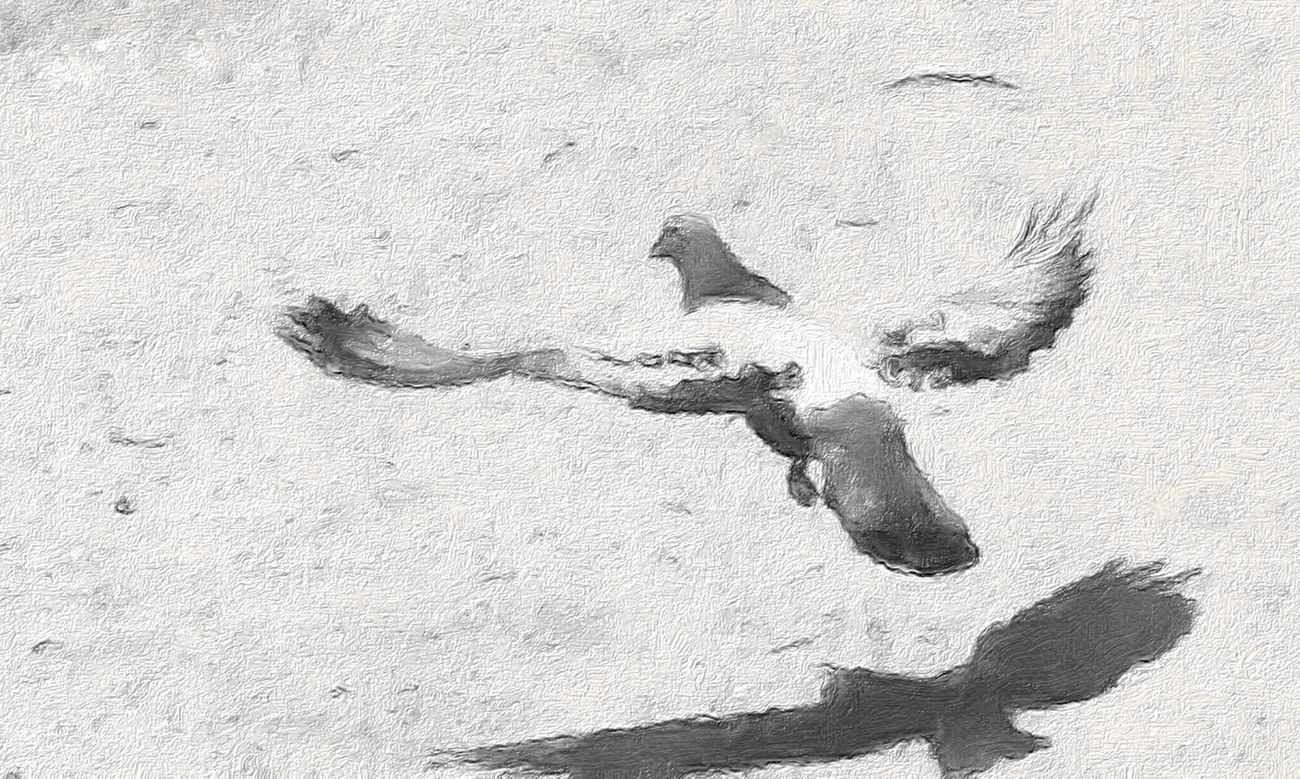 A painting like iPad Air 2 photography. Pigeons Bird Black And White PaintingStyle Ipadair2