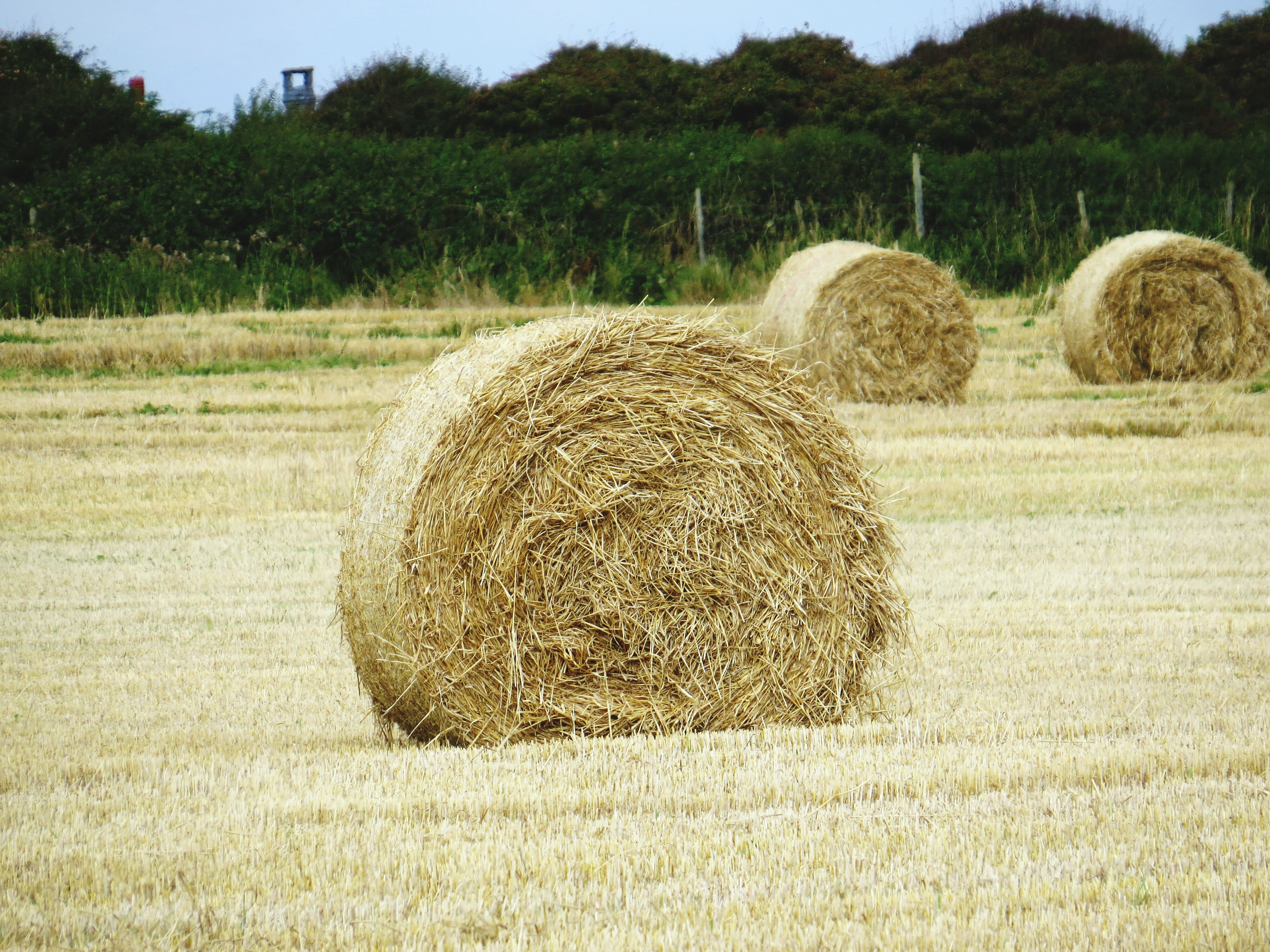 bale, hay, agriculture, rural scene, field, harvesting, tree, farm, tranquil scene, nature, tranquility, blue, outdoors, beauty in nature, growth, solitude, no people, abundance, farmland, scenics