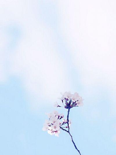 Flowers Simplicity Keicomoment