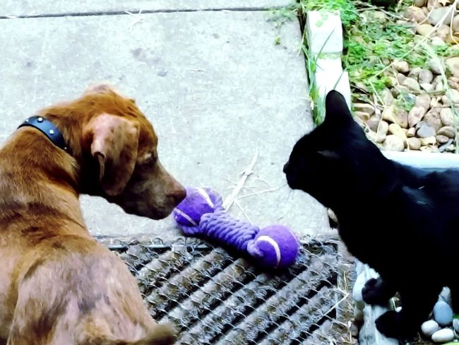 Friends ❤ Furbaby Taking Photos Cat Dog Fr