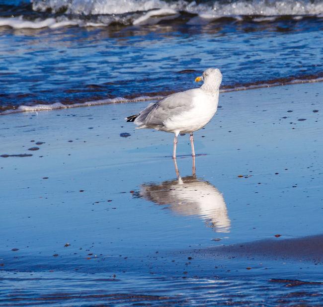 Bird Meer Move One Animal Outdoors Spiegelung Vogel Water