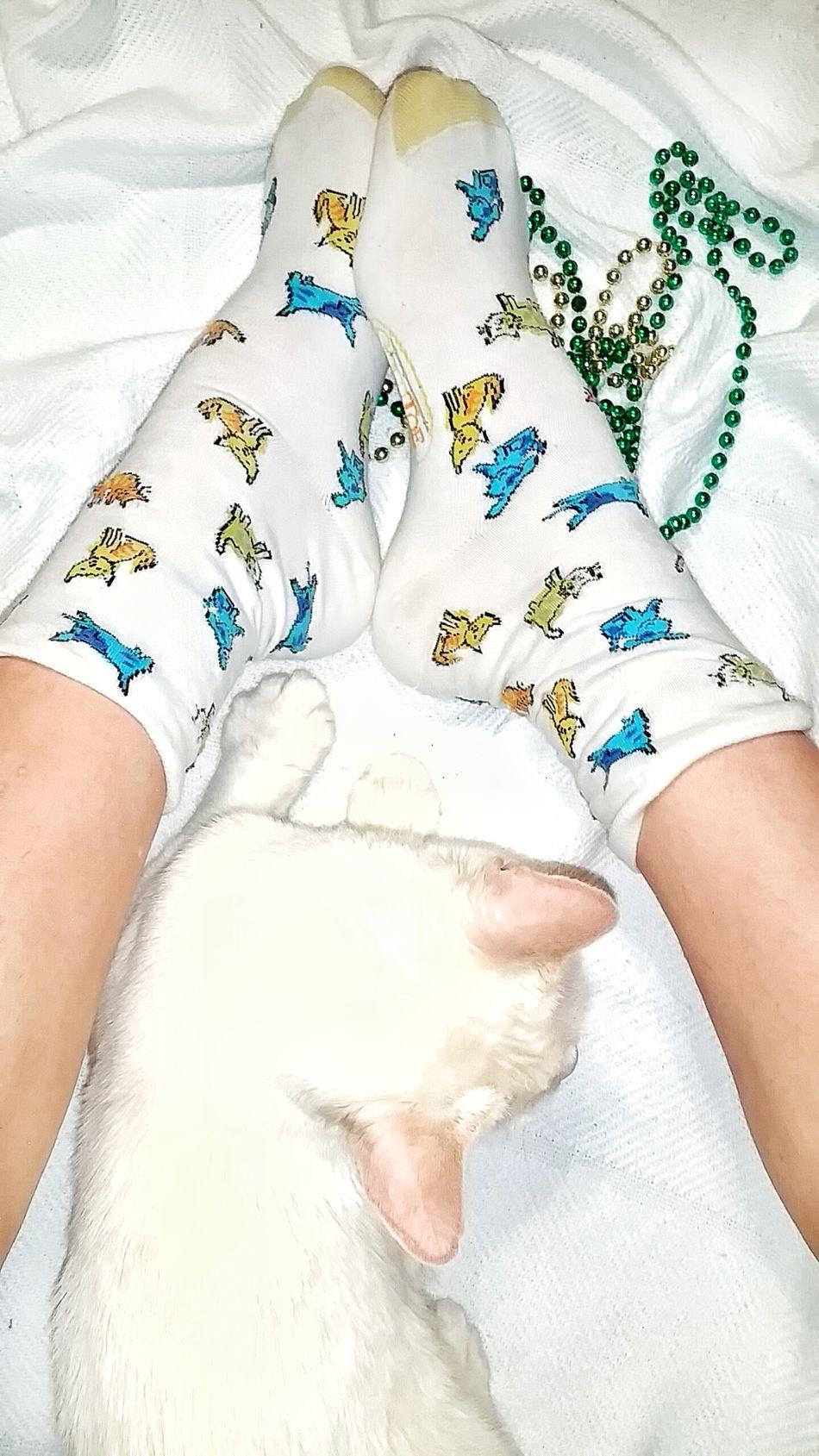 TK Maxx Socksie Pets One Animal Foot Multicolors  Cat Lovers Animal Colorful Socks Cat Cozy Comfortable Softness Cute Socks Clothing Socks Funny Socks Cat Socks Texture Funny Cat Lazy Cat Colorful Design Close-up Bright Colors Multi Colored