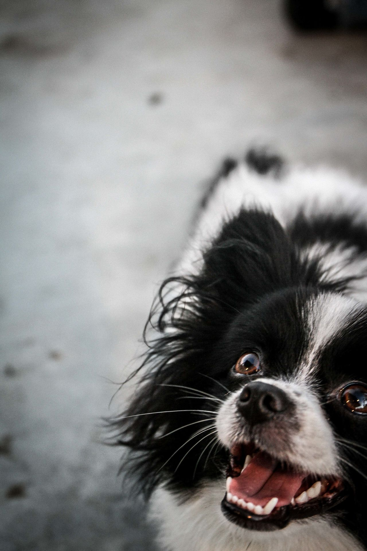 Beautiful stock photos of lustige tiere, Animal Themes, Close-Up, Day, Dog