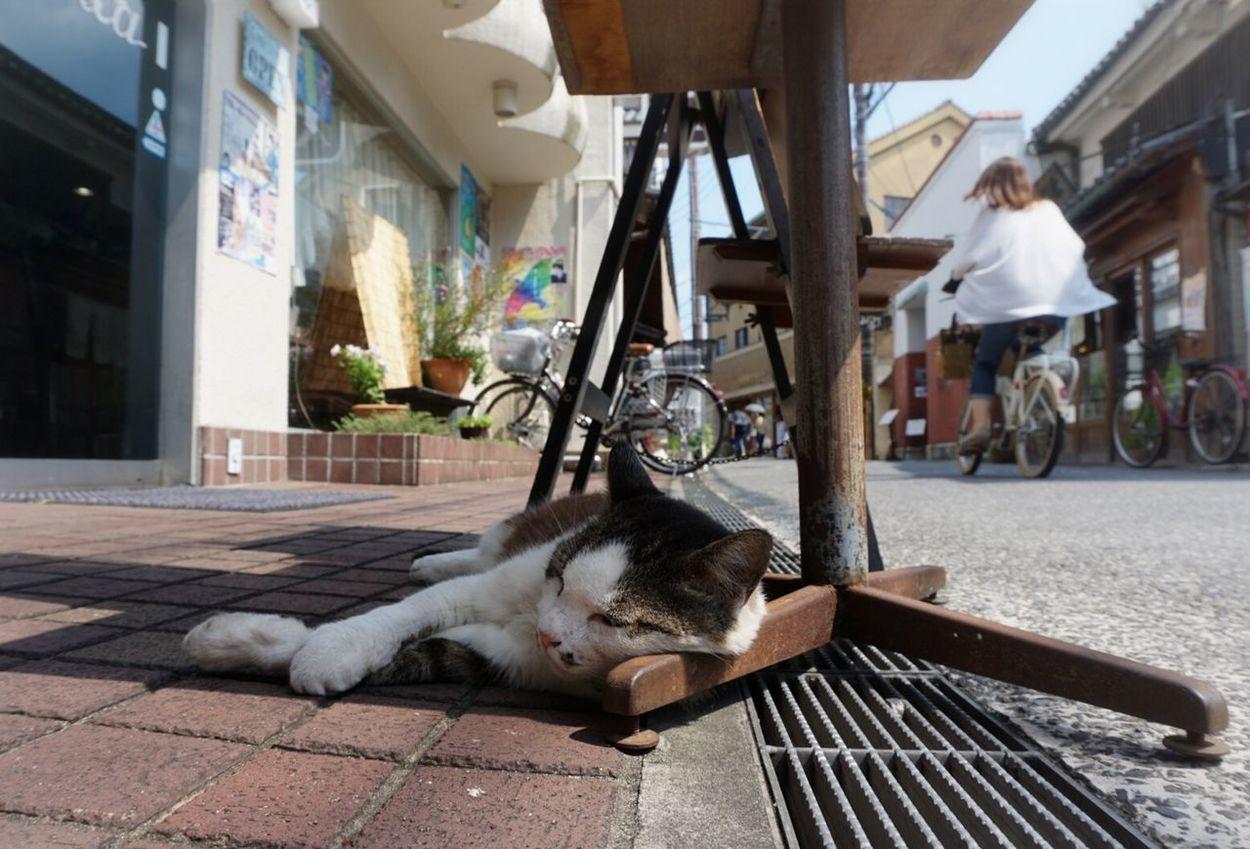 Streetphotography Myhometown Kurashiki Cat Cat Lovers Cats Of EyeEm Cat Photography Hot Day 夏日の看板猫さん