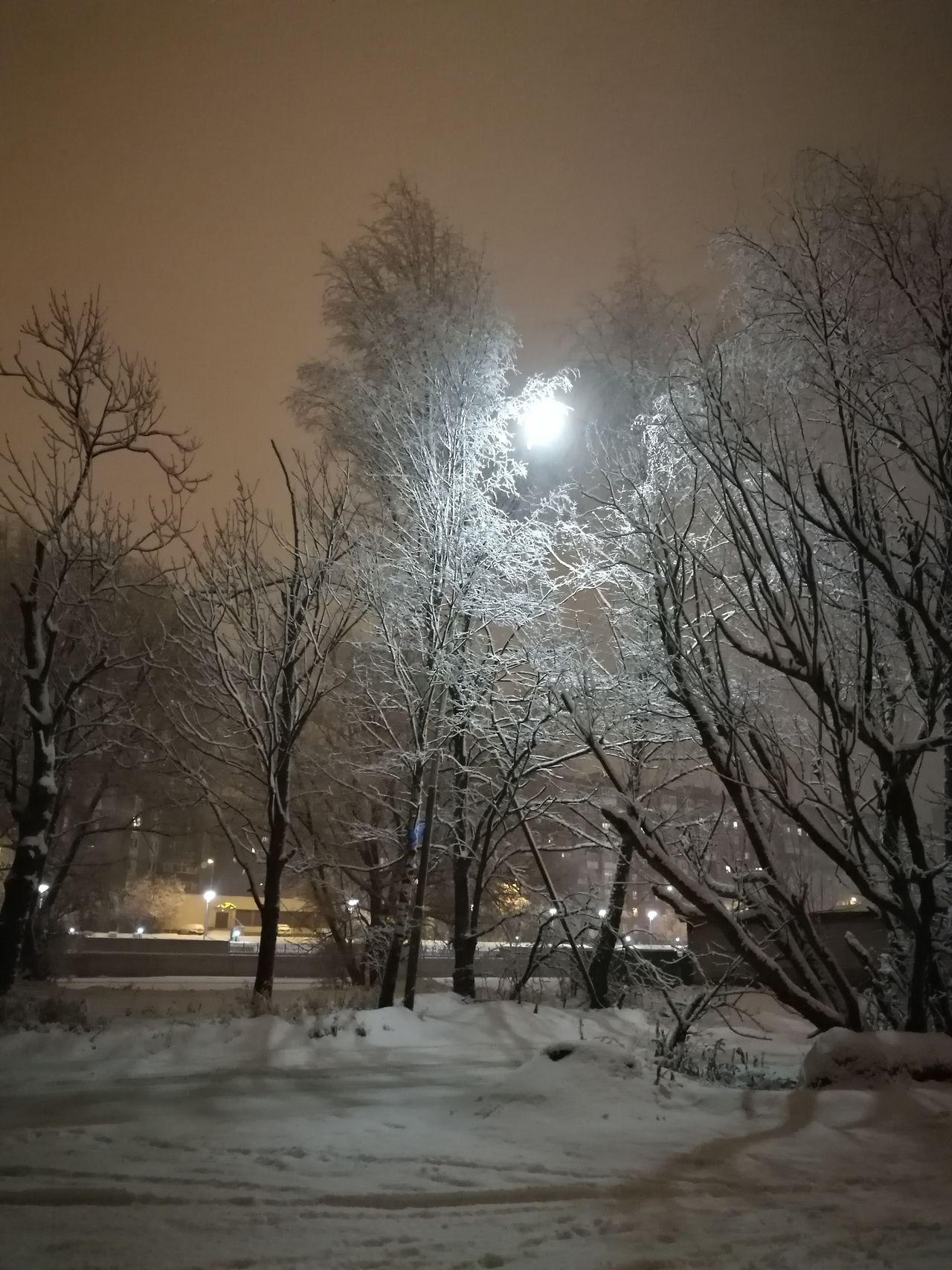 Дерево с функцией фонаря.