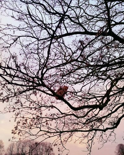 Animal Themes Bare Tree Branch Nature Low Angle View Sky No People Tree Animals In The Wild Beauty In Nature Outdoors One Animal Perching Day Squirrel Squirrel Photo Squirrel Closeup Squirrel Photography
