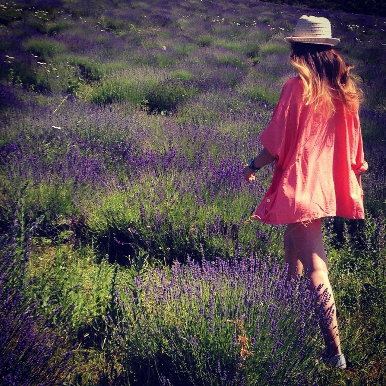purple, flower, growth, lavender, field, rear view, nature, plant, one person, beauty in nature, real people, agriculture, outdoors, lifestyles, day, adult, people