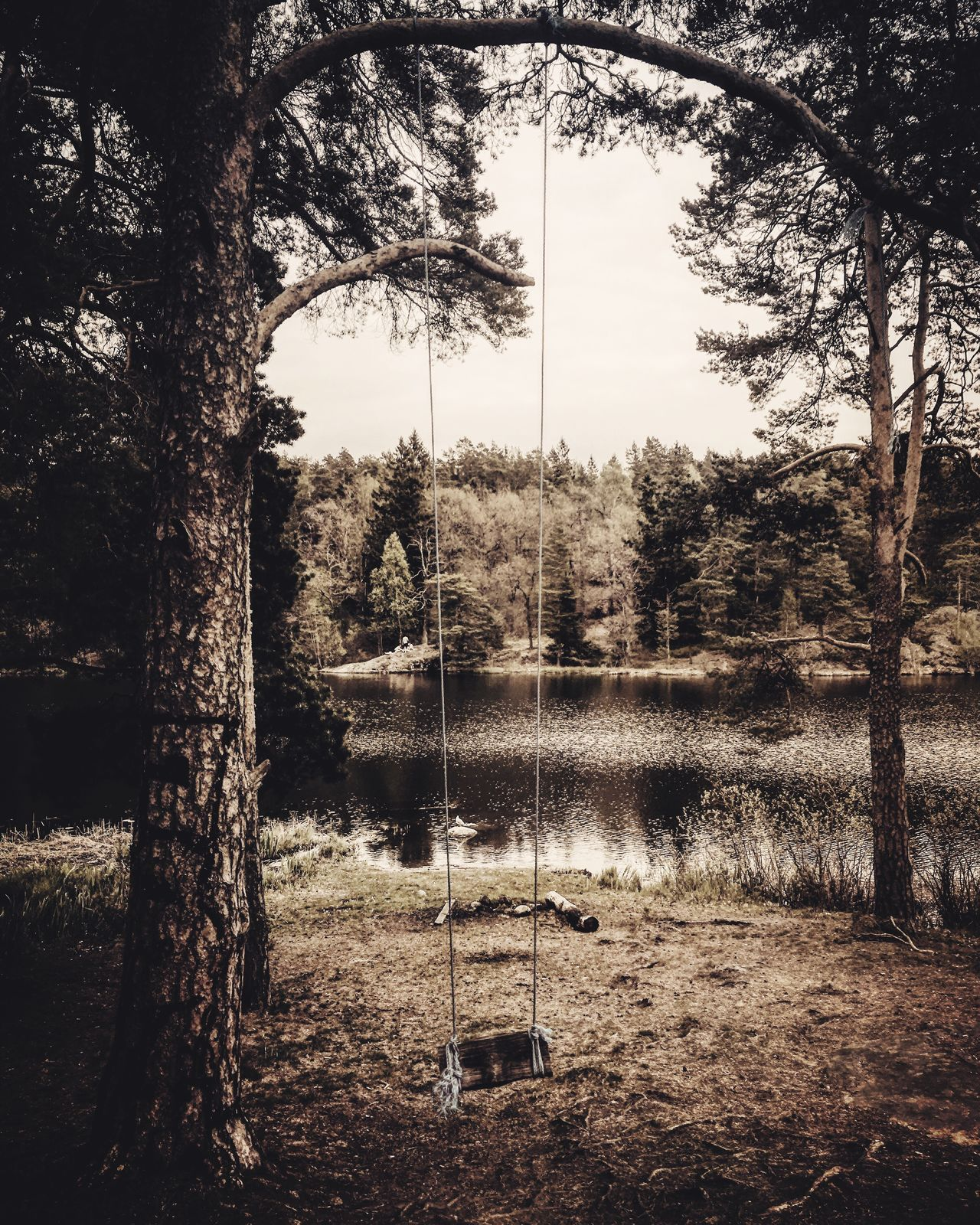 The Great Outdoors - 2017 EyeEm Awards Tree Rope Swing Swing No People Day Playground Outdoors Nature Tree Trunk Growth Sky Water Beauty In Nature Nature Photography Nature_collection Tranquil Scene Landscape Landscape_Collection Landscape_photography WoodLand Wanderlust Branch Pine Tree Tranquility