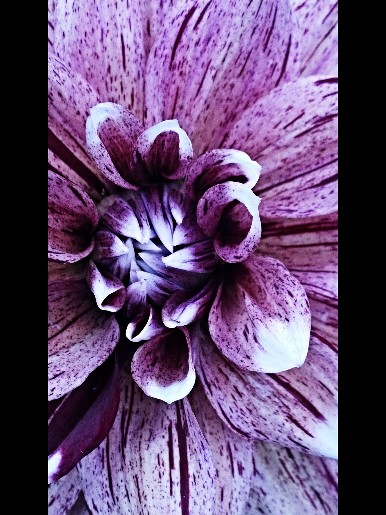 Flowerporn Flowers StreamzooFlowers StreamzooPics Malephotographerofthemonth The Ville EyeEm Best Shots Streamzoofamily Tadaa Community Eye4photography