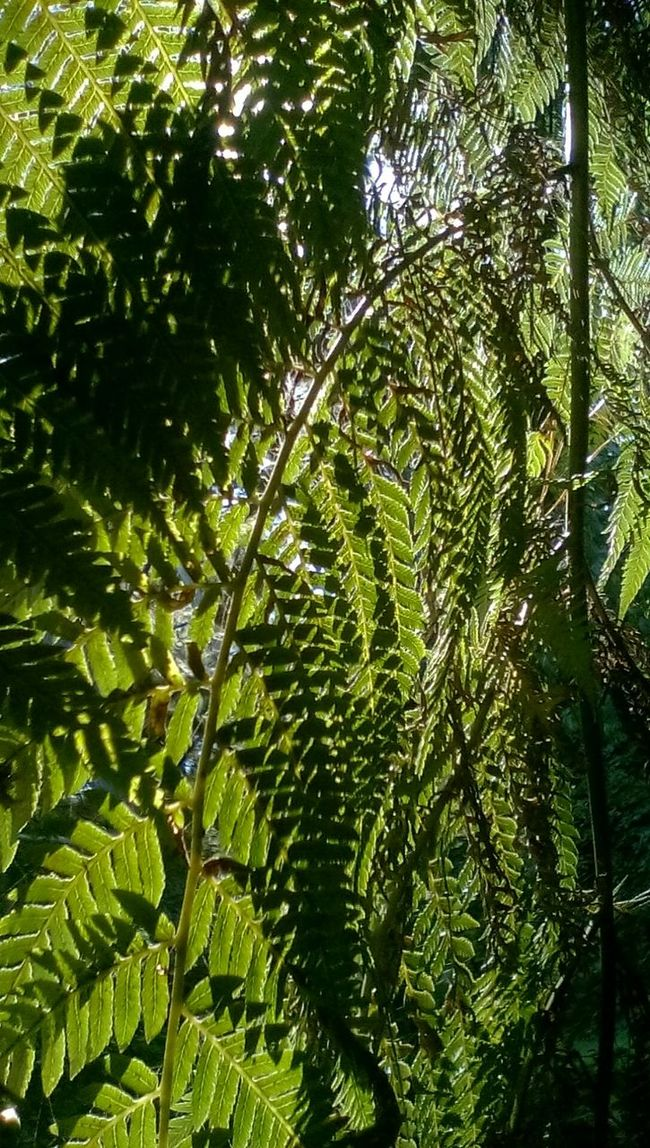 Nature Photography Enjoying Life Trees and Light