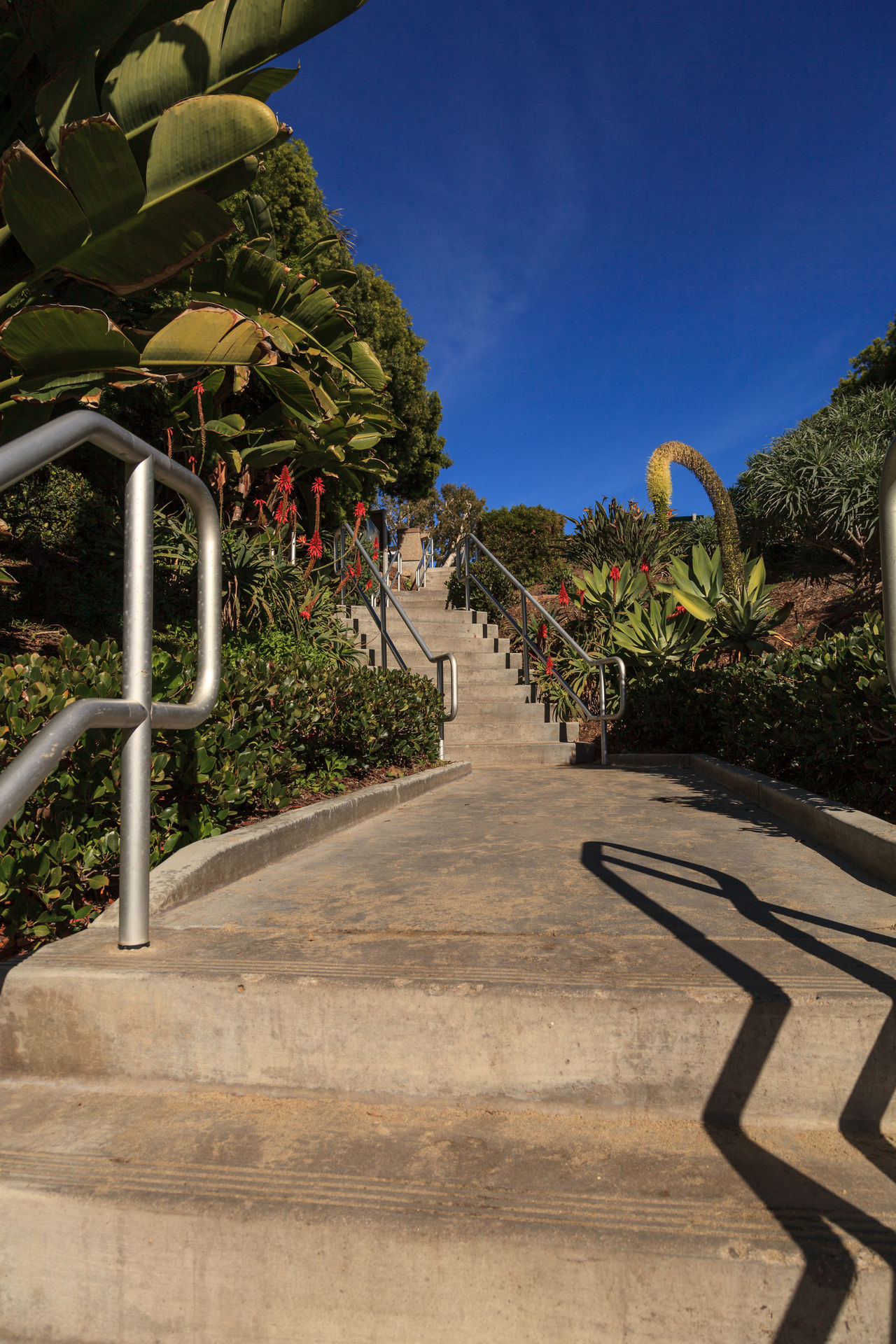 Steps to Shaw's Cove Beach in Laguna Beach, California, USA Beach Day Garden Laguna Beach, CA Nature No People Ocean Ocean View Outdoors Shaws Cove Sky Stairs Stairway Steps Tree