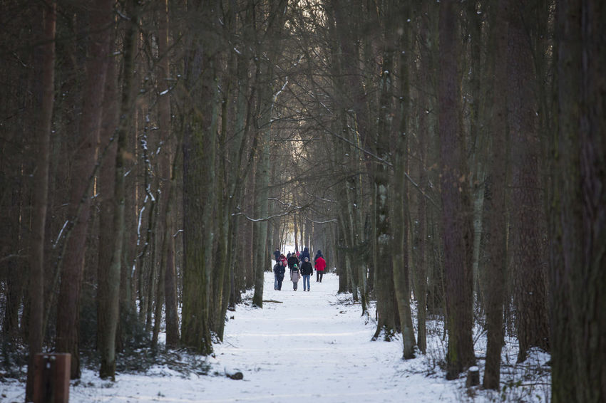 06.01.2017 The Stefan Starzyński Kabaty Woods Nature Reserve Cold Temperature Daily Life Day Forest Kabaty Nature Nature Outdoor Activity Outdoors Park People Poland Reserve Snow Starzyński Stefan Walk Warsaw Winter WoodLand Woods