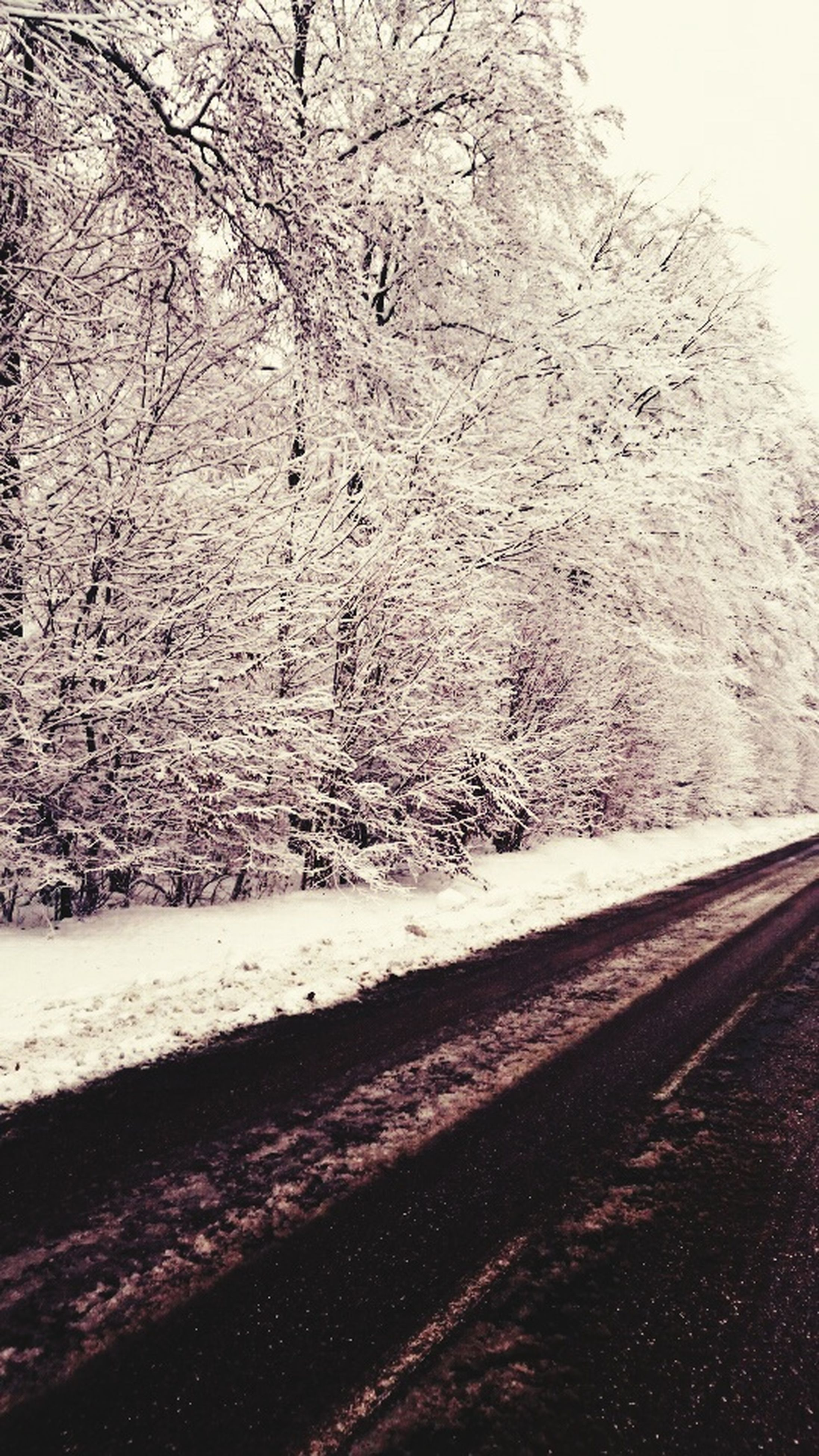 road, transportation, the way forward, road marking, street, snow, asphalt, winter, cold temperature, nature, day, diminishing perspective, outdoors, no people, season, weather, empty road, vanishing point, sky, tree