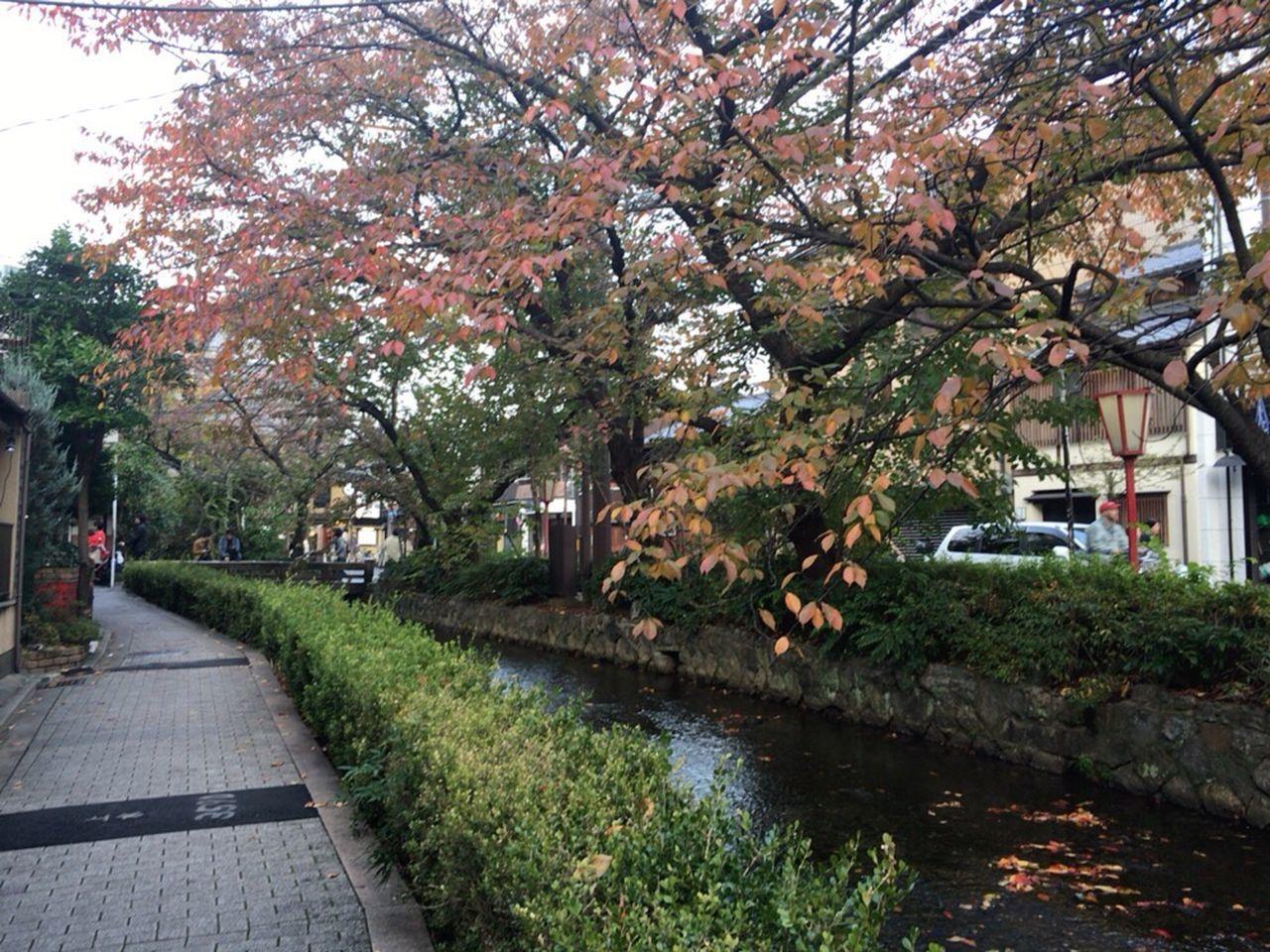 Kyoto Autumn Kyoto Street Kyoto Japan Kyoto City