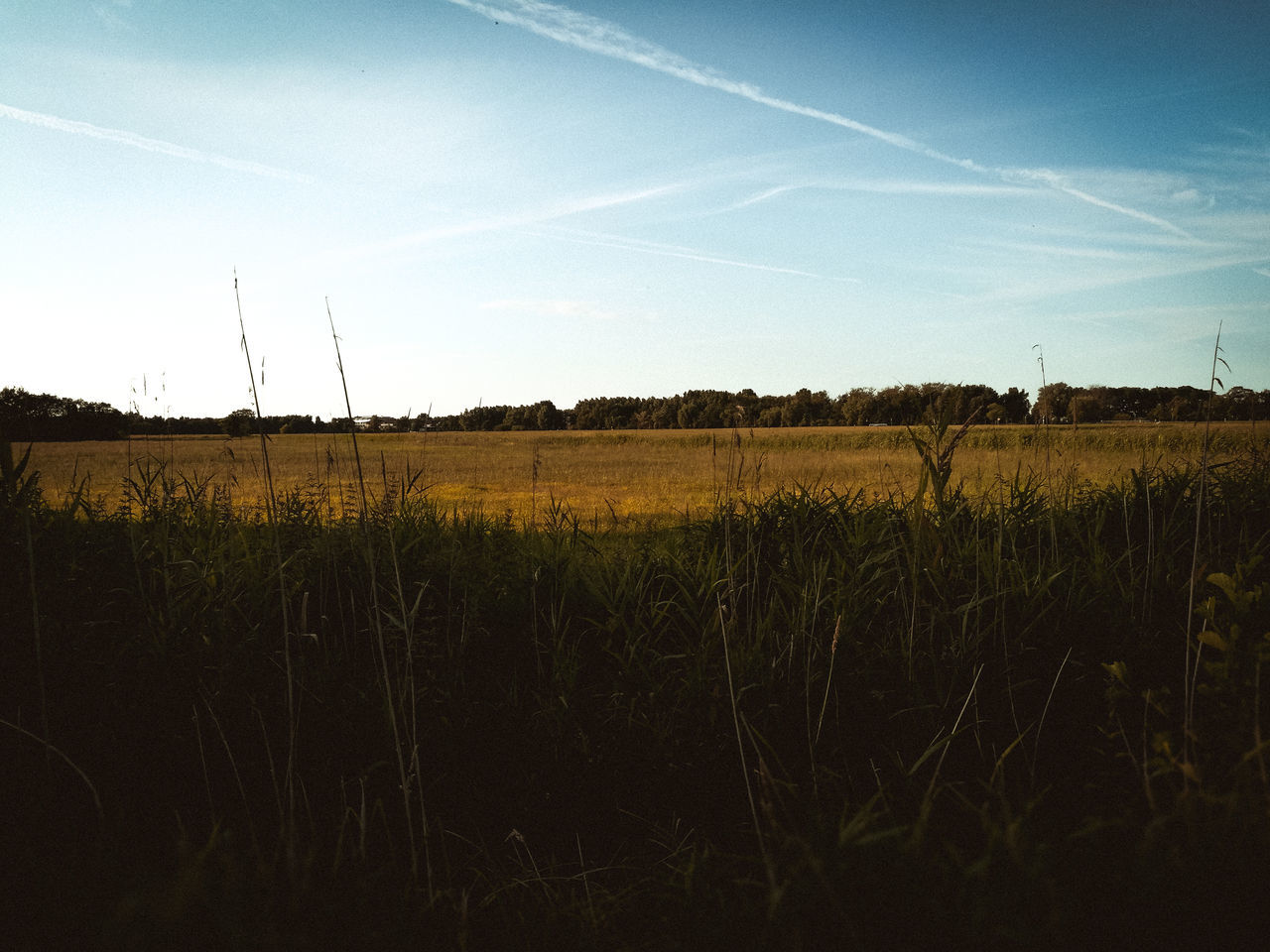 countryside. Beauty In Nature Day Field Grass Growth Landscape Nature No People Outdoors Scenics Sky Tranquil Scene Tranquility Tree