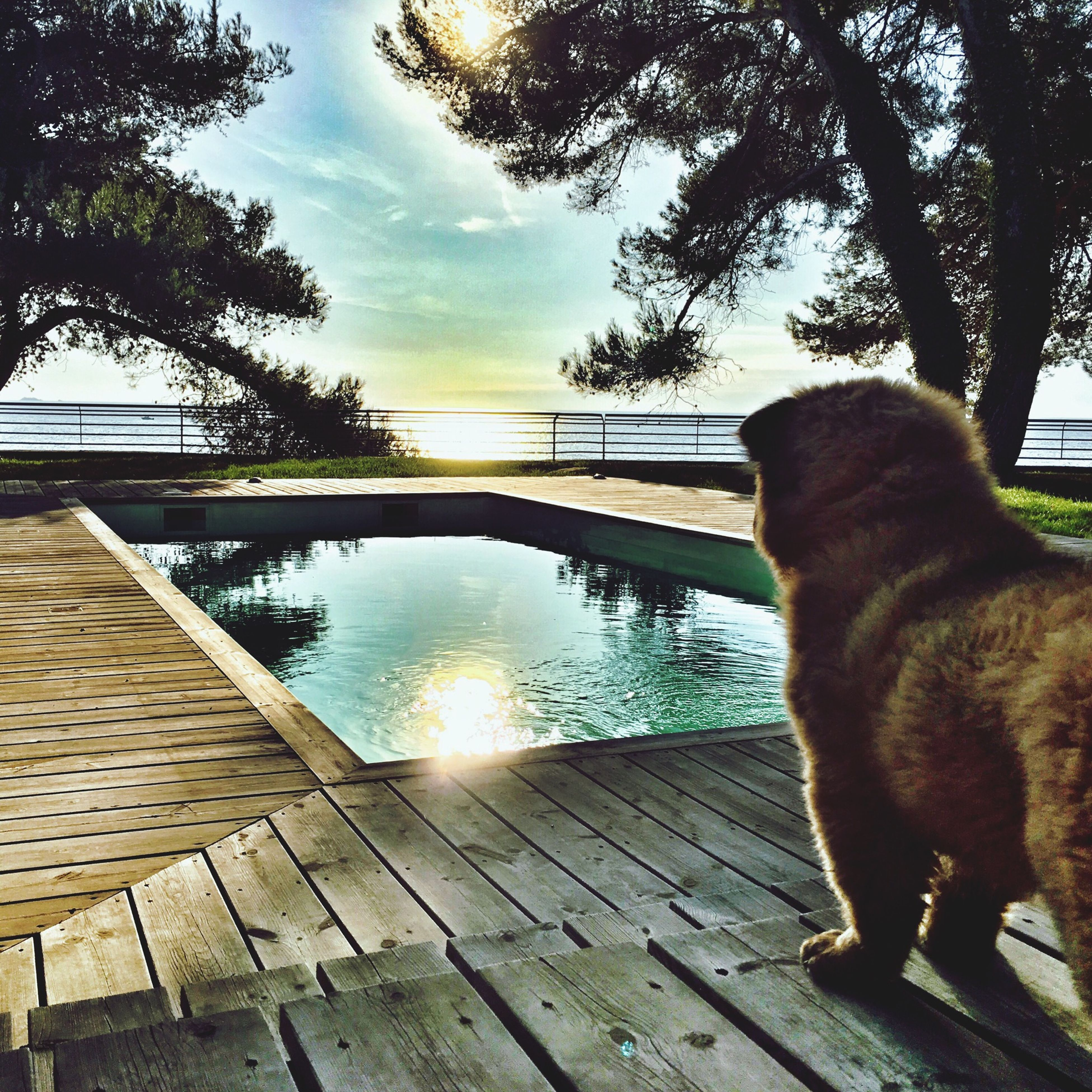 animal themes, pets, one animal, domestic animals, mammal, water, sunlight, dog, sky, reflection, domestic cat, tree, built structure, railing, outdoors, architecture, day, shadow, no people, nature