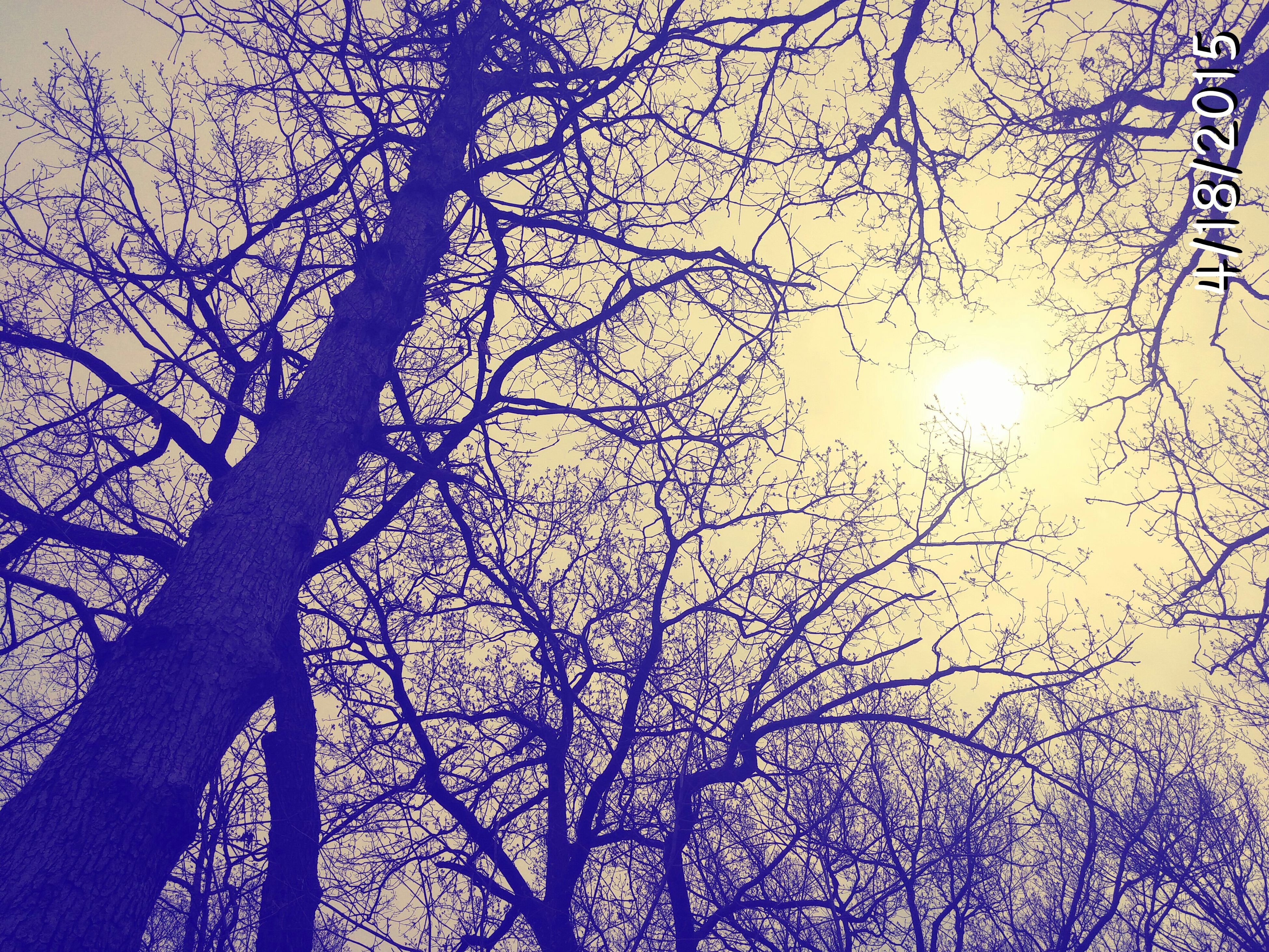 branch, tree, bare tree, low angle view, silhouette, nature, sky, beauty in nature, sun, tranquility, growth, sunset, clear sky, scenics, sunlight, outdoors, tree trunk, no people, dusk, tranquil scene