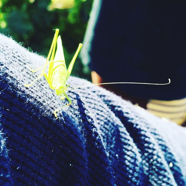 Deceptively Simple with perfect harmony with nature Grasshopper