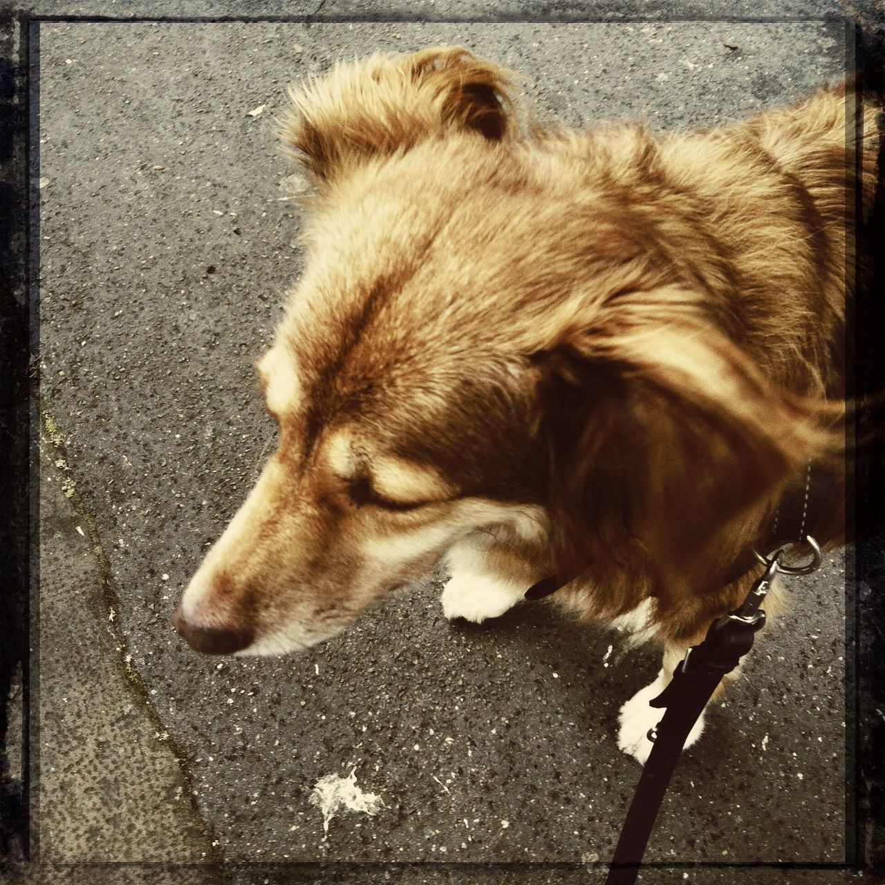 Dog Hipstamatic