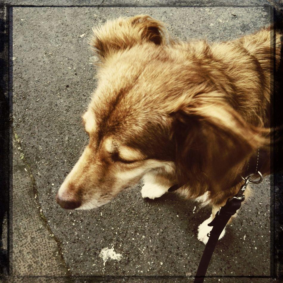 Dog Hipstamatic