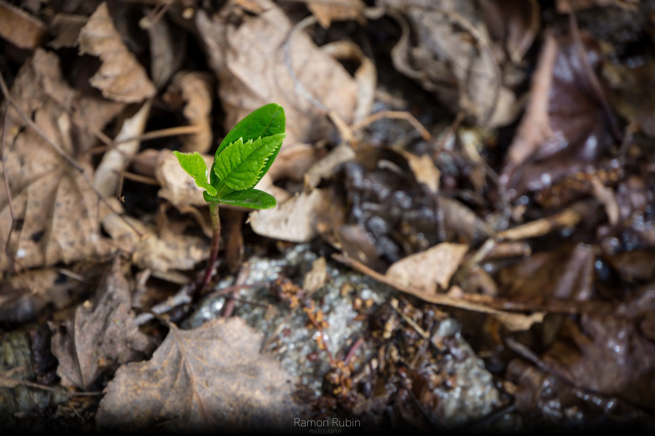 Leaf Plant Growth Nature Green Color New Life Sapling Close-up Beginnings Plantation Fragility Agriculture Freshness No People Beauty In Nature Outdoors Day