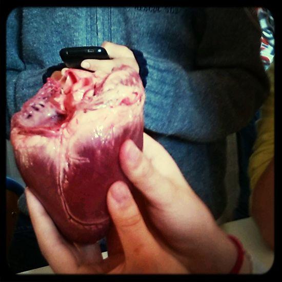 Disèquer un coeur de beuf.... First Eyeem Photo Weris